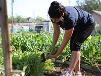 Sophomore Diana Villenas tends to the crop.