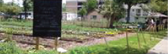 UST Community Vegetable Garden