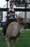 Deck the Mall camel rides