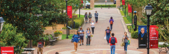 Students walking on the University of St. Thomas campus