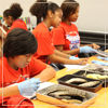 Young Scholars Cultivate STEM with D.R.E.M.E. @ UST