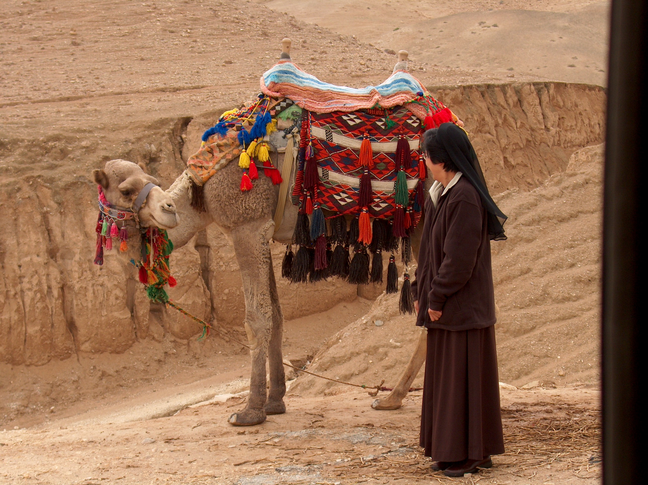 Sister Monica Novalta, FSE meets a camel near the Dead Sea.